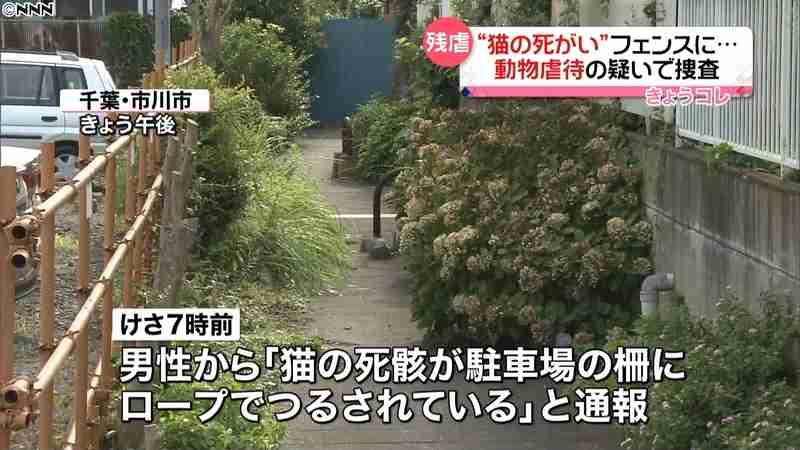 猫の死骸が大の字で…フェンスにつるされる(日本テレビ系(NNN)) - Yahoo!ニュース