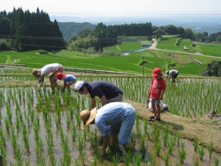 農業の人手不足が深刻、バイトさえ…農家悲鳴