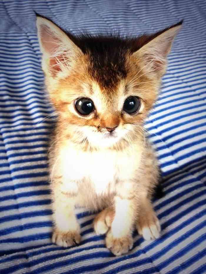 カラスに襲われ、瀕死の重傷を負い、それでも必死に生きた子猫「わさびちゃん」、天国へ…