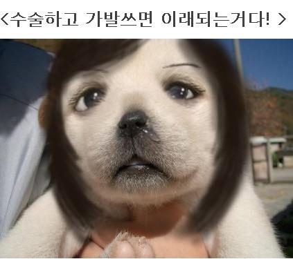 """犬も""""おめめパッチリ""""にしたい!?韓国でペットの整形ブーム"""