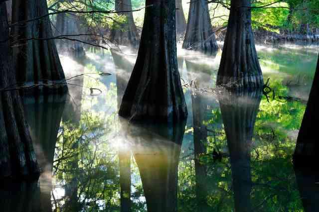 まるで「もののけ姫」 九大の森、SNSで人気 福岡 (朝日新聞デジタル) - Yahoo!ニュース