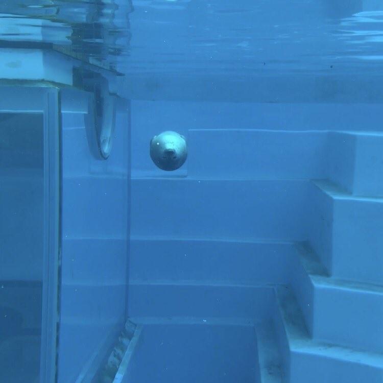 アザラシの連続写真が「癒される」 「泳ぎ方が面白い」 : J-CASTニュース