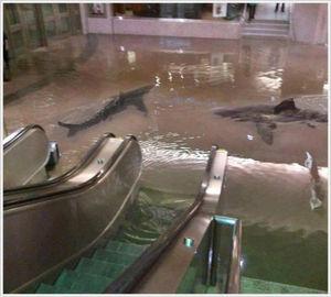 Ceron - 「クエートにある『科学センター』の鮫の水槽が壊れて」の画像はコラなのか? - NAVER まとめ