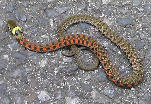 男児の毒ヘビ被害場所、伊丹の公園ではなく宝塚の山道…友人宅でもかまれる 兵庫県警、友人の話もとに訂正