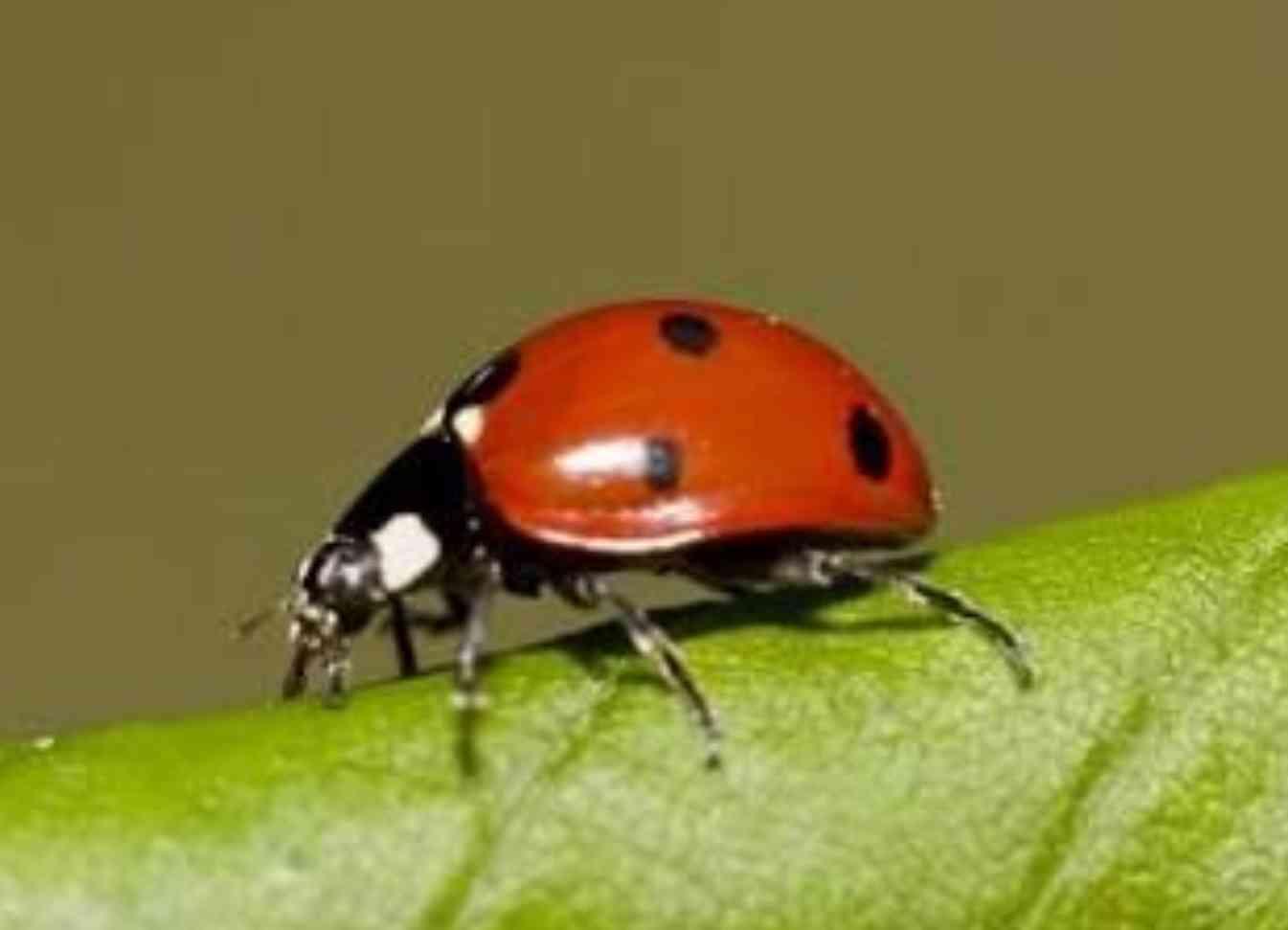 【閲覧注意】もし虫の世界にがるちゃんがあったら立ちそうなトピpart2