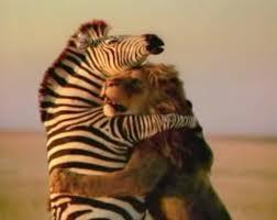 動物のハグ画像