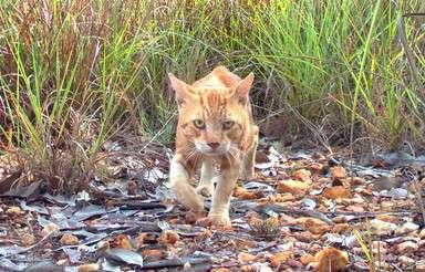 豪政府、野良猫200万匹の殺処分を計画 仏女優らが非難 写真1枚 国際ニュース:AFPBB News