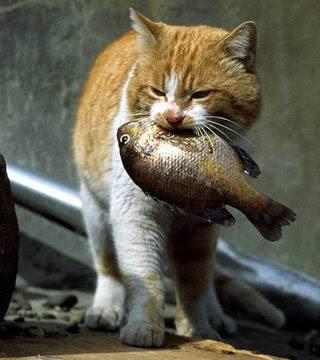 干物や漬け魚好きな方!