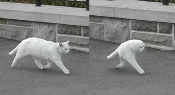 有り得ないくらい長い足を持つネコがネットで話題に