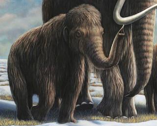 シベリアの永久凍土で発見された少女マンモス