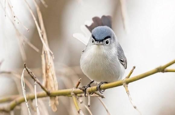両津勘吉そっくりなブユムシクイはつながり眉毛が可愛い鳥だよ! | netgeek