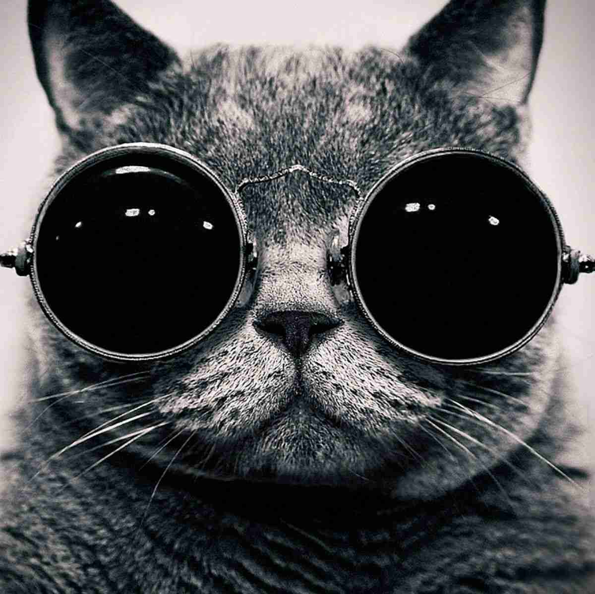 【驚愕】猫を介して、「人間の脳」に寄生し性格を変える『トキソプラズマ』と呼ばれる寄生虫 - NAVER まとめ