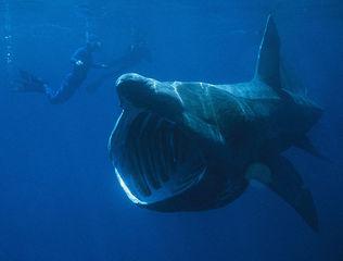 夏だしサメの話しようよ