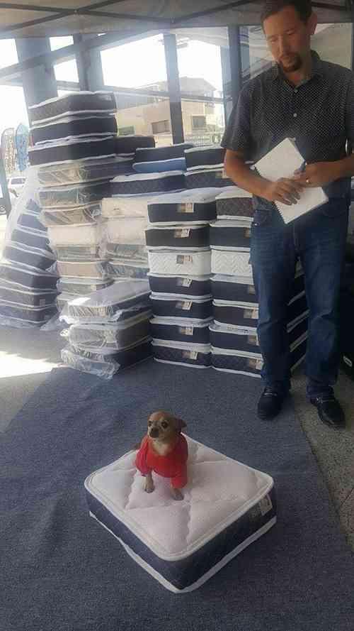 「地元の店でマットレスを買うと…犬用のミニマットレスをおまけしてくれる」→「むしろそっちだけ欲しい」との声