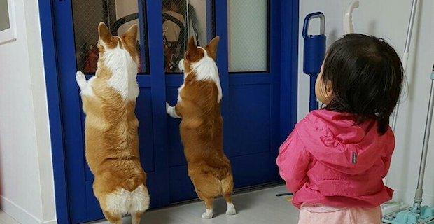 外を覗いている犬に気がついた子ども。次の瞬間…可愛すぎることに(笑)! | BUZZmag