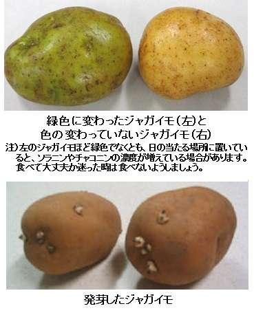 ジャガイモで食中毒…広島の小学校、9人搬送