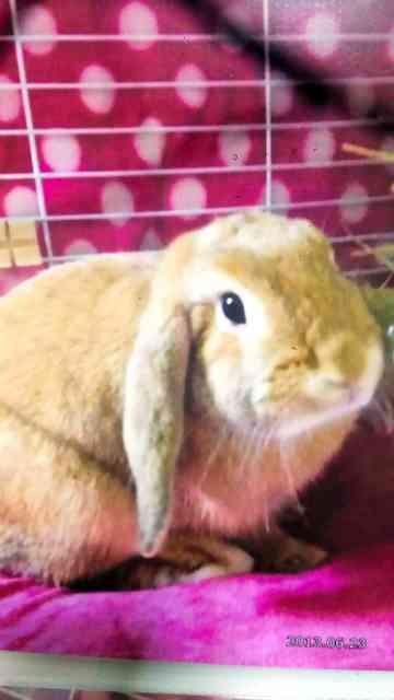 爪切り中、ウサギ骨折 獣医師に15万円賠償命令:朝日新聞デジタル