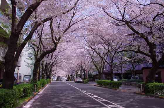 東京23区の魅力