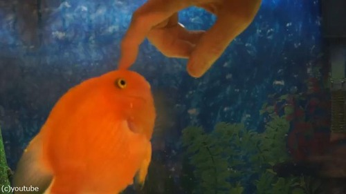 「魚ってこんなに人間に懐くんだなぁ」(動画)