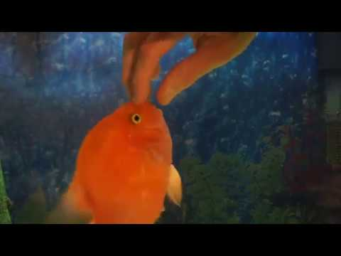 Fish loves to get pet - YouTube