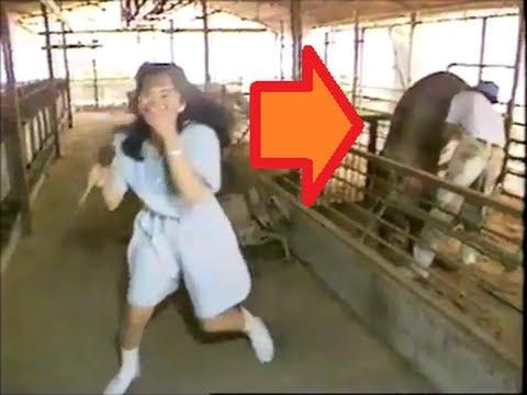 【放送事故】養豚所を紹介する女性リポーターの背後で豚がいきなり交尾を始めた! - YouTube