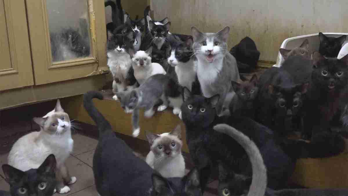 ネコに家が壊される~広がる ペット多頭飼育崩壊~ - NHK クローズアップ現代+