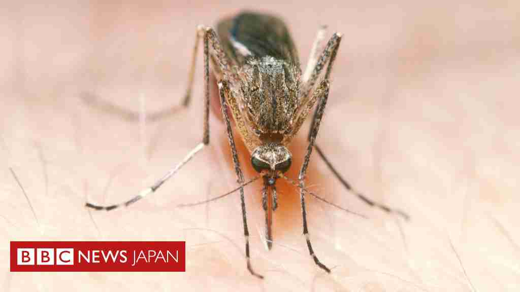 何カ所も刺されて蚊に「死ね!」とツイート……アカウント凍結 - BBCニュース
