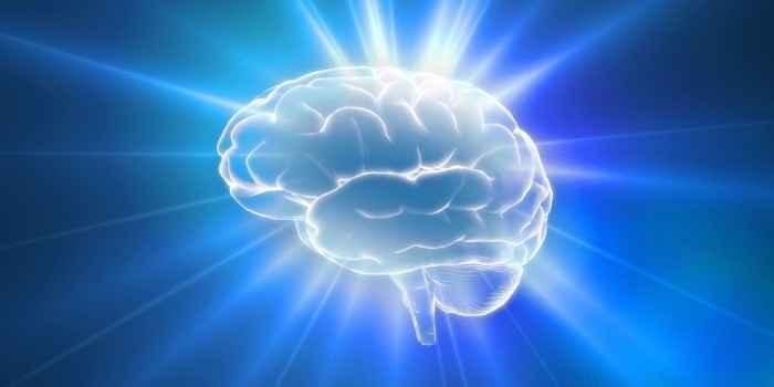 「脳が大きいと頭がいい」は嘘だった!知能にとって重要なのは脳の構造