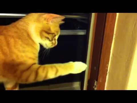 カメムシの悪臭に吐き気を催す猫 - YouTube