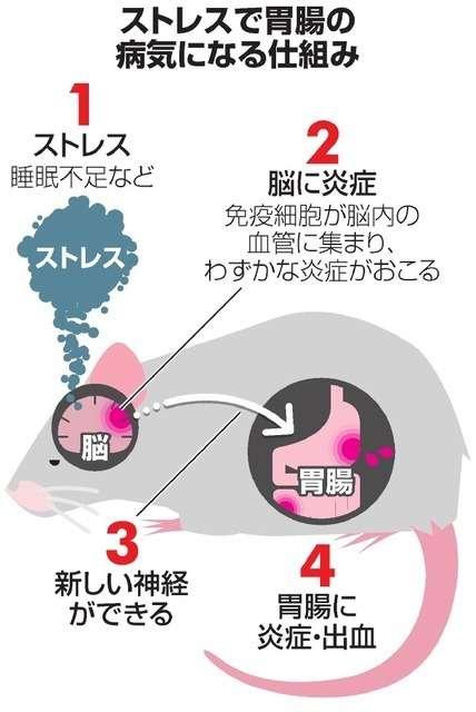 「病は気から」研究で裏づけ マウスで解明 北海道大