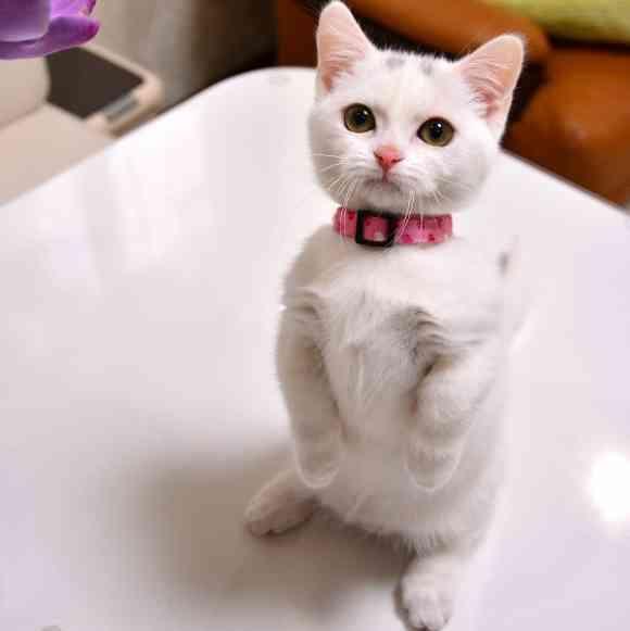 立つのなんて、簡単~簡単~♪│フェリシモ猫部ギャラリー