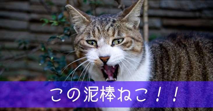 今井絵理子 「離党でも辞職でも」と号泣 後見人が明かす