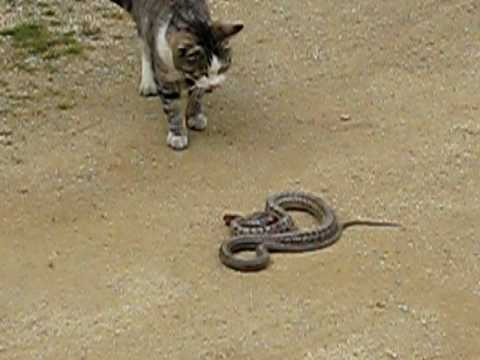 猫vs蛇 - YouTube