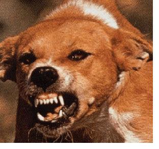 生還したのはたった一人◆致死率99.9%◆狂犬病の恐怖を動画でまとめ◆閲覧注意 - NAVER まとめ