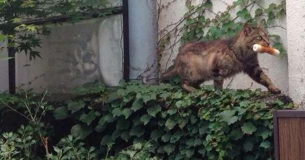 ちくわをくわえて横切っていく8匹の猫 | netgeek