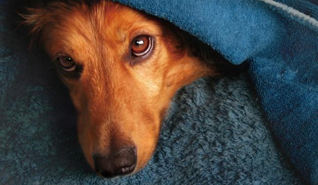 【犬とベッド】洗濯・掃除はどうすべき!?〜犬のベッドを清潔に保つために取るべきステップ   the WOOF イヌメディア