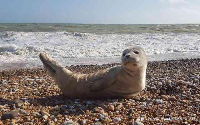 浜辺に落ちてたものにカメラを向けると?「可愛いポーズするね、君」