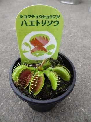 食虫植物の育て方