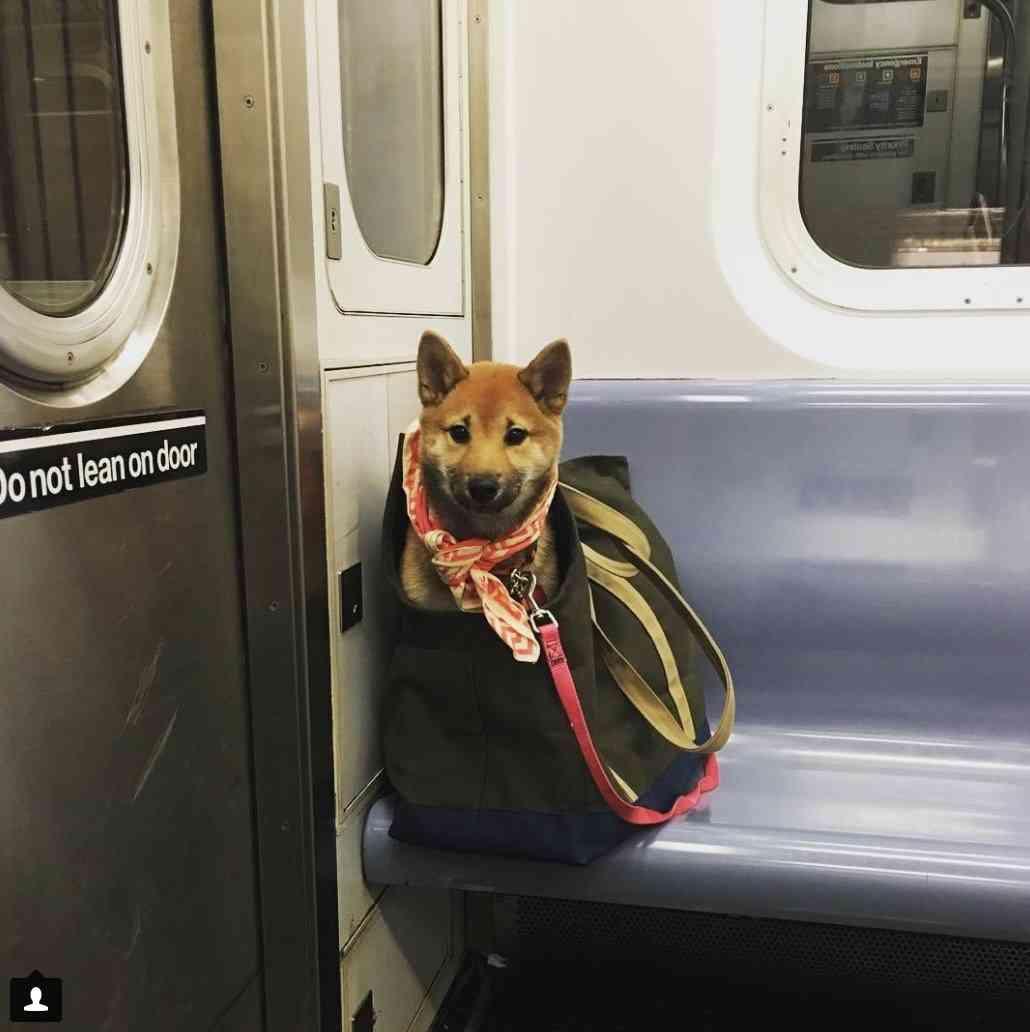 ペットを電車に乗せた馬場典子、SNSにも載せ謝罪