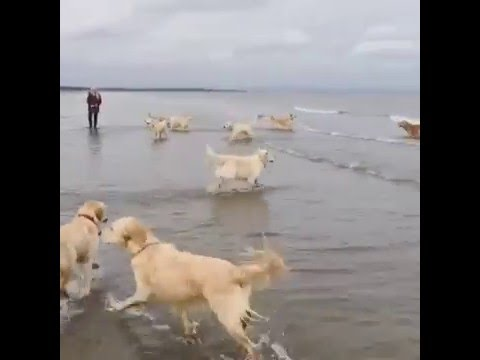 Dog Hops into Ocean - YouTube