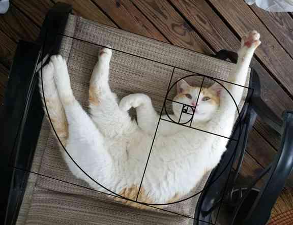 【衝撃の事実】 猫の美しさは黄金比を当てはめる事によって説明できるゾ!!! : 〓 ねこメモ 〓