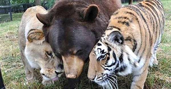 【癒されトピ】動物たちがくっついてる画像