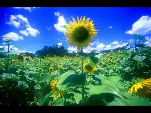 Summer Joe hisaishi - YouTube