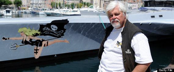 シー・シェパード、今年の調査捕鯨妨害取りやめ 「日本に対抗できず」
