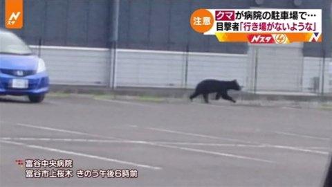 宮城・富谷市の病院駐車場にクマ、目撃者「行き場がないような」