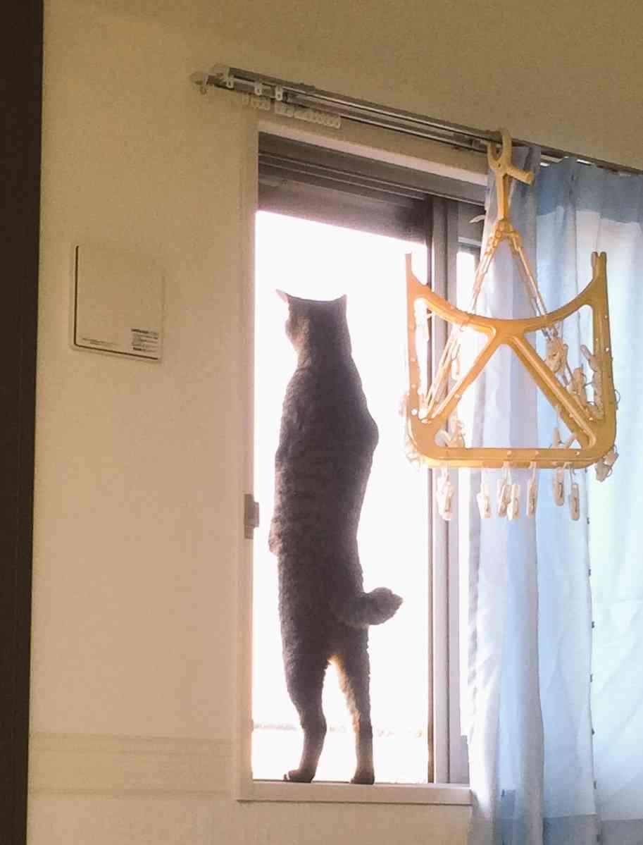 猫はぜんぜん「猫背」じゃなかった…「猫背とは、何か。」