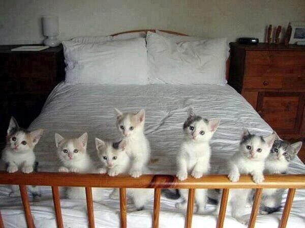 子猫の画像ください