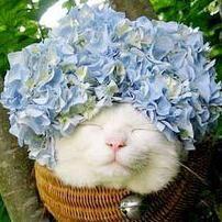 【海外】こりゃ惚れてまうやろ。かご猫シロさん - NAVER まとめ