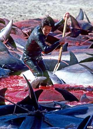 イルカ追い込み漁は存続するべき?廃止するべき?