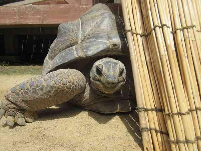動物園から逃走「ゾウガメ」親子が林の中で発見